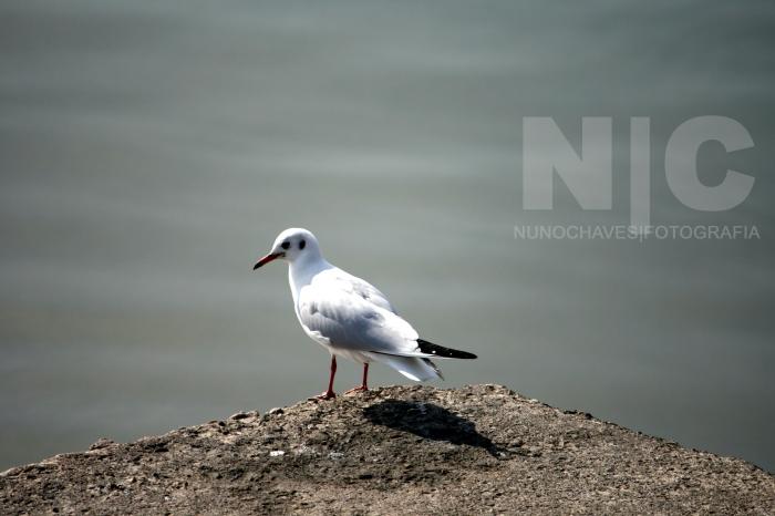 Nuno Chaves Fotografia