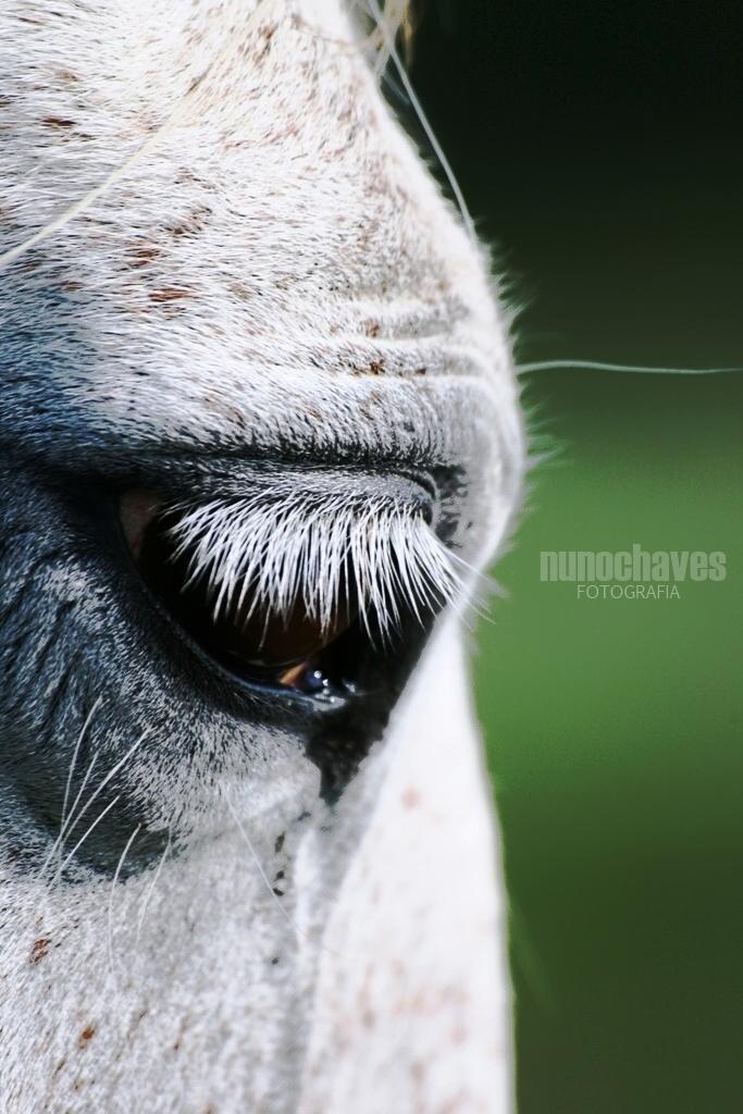 29. Cavalo a solta (GP)